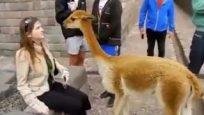 Komik Hayvan Saldırıları